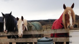 3 of the horses from Dun Daraich Stables, Glenfinart