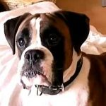Pet dog shot dead in Glenfinart