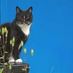 [Sat. 14:55:34] Blue meow