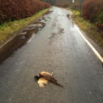 Road Kill Ardentinny - Is it Necessary?