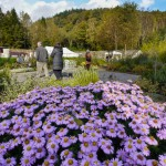 Gardener/Volunteer Supervisor required for Glenfinart Walled Garden Project