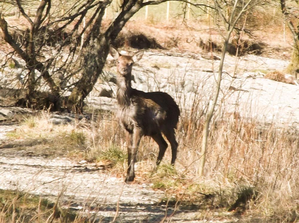 Deer adventure