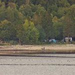 Ardentinny beach picnic area proposals